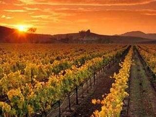 澳大利亚的阿德莱德是红酒产地吗