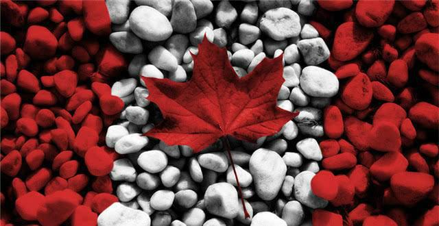 加拿大新移民就医必备!