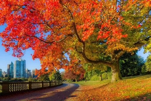 加拿大最美枫叶季,东西部移民家庭赏枫路线盘点!