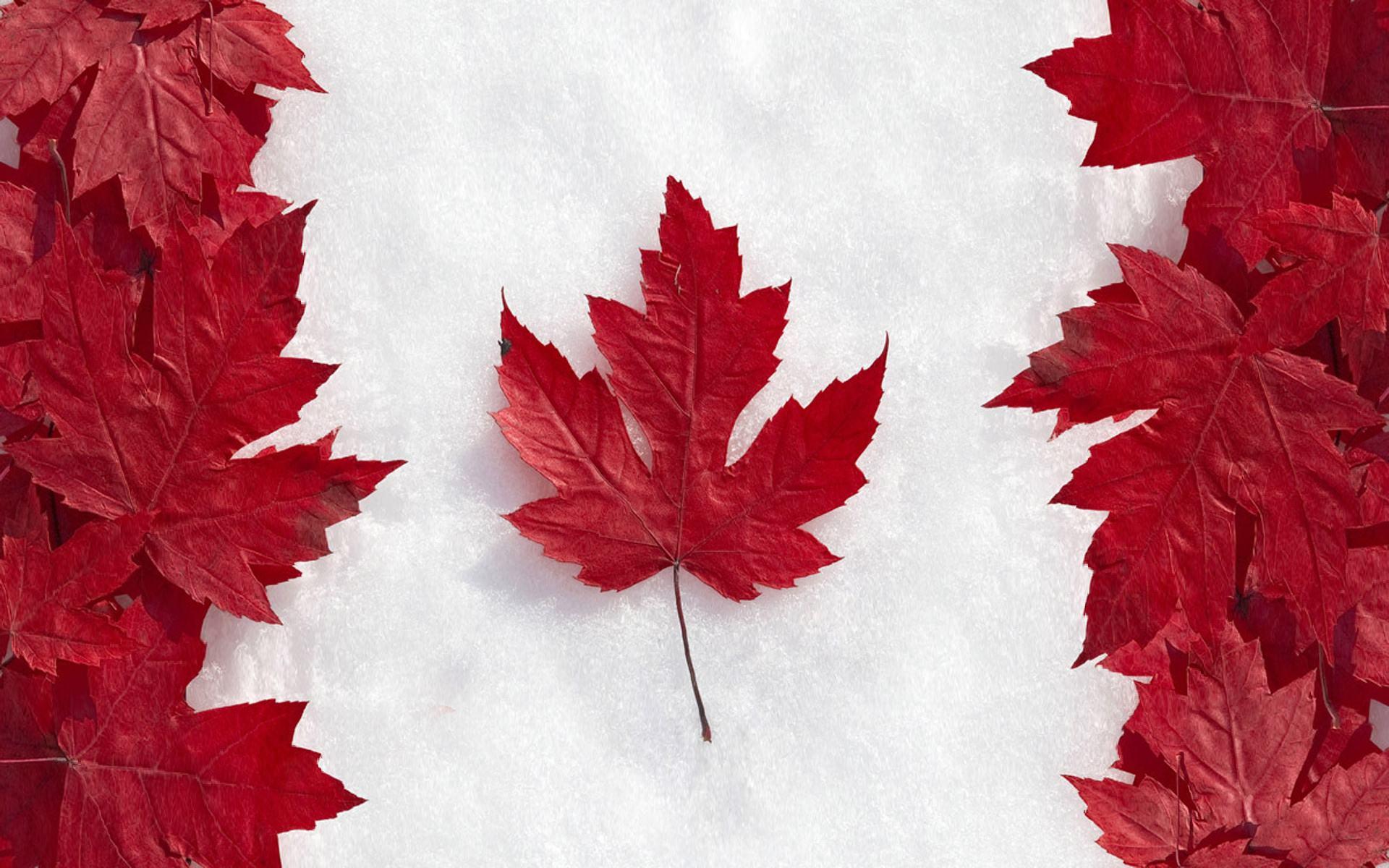 加拿大PEI省企业家移民最新甄选结果出炉,最低分152分!