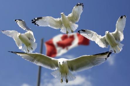 加拿大安省HCP洲巡出国