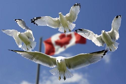 加拿大萨省无雇主技术移民11月第一捞公布,获邀趋势依旧稳定!