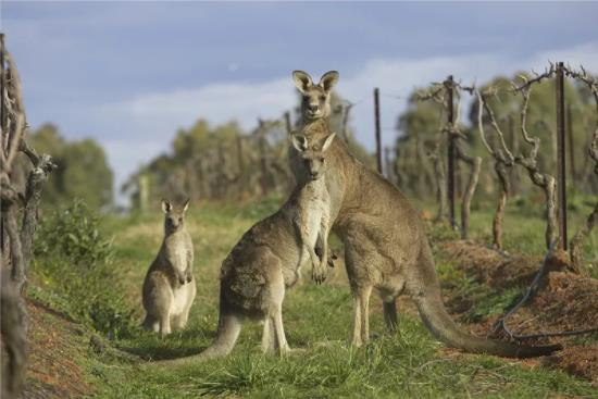 澳大利亚移民新政