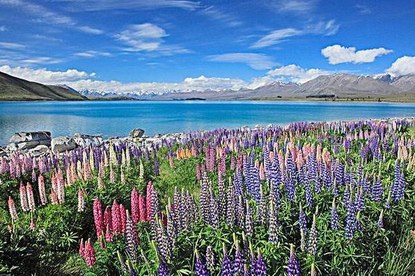 新西兰投资移民洲巡