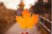 加拿大联邦小镇移民试点计划rnip,安省Thunder Bay社区公布职位配额与获邀分值