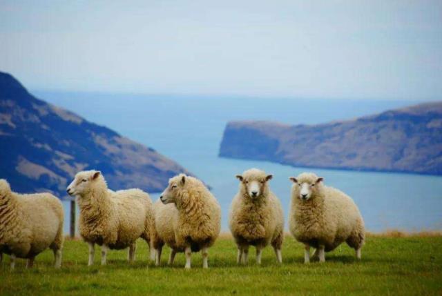 新西兰技术移民洲巡出国