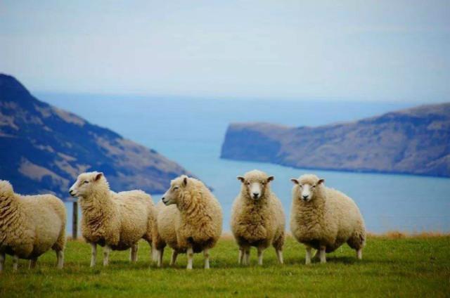 新西兰2020移民政策洲巡出国