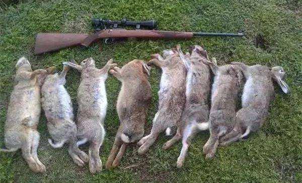 新西兰射杀野兔洲巡出国