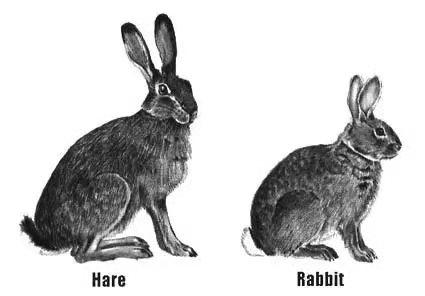 新西兰野兔洲巡出国