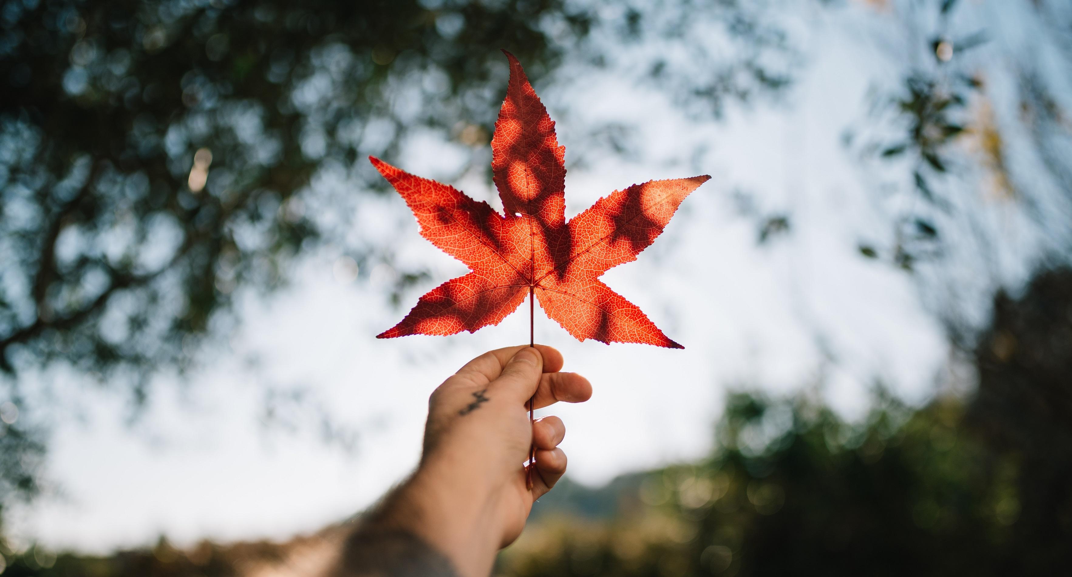 加拿大技术移民之联邦EE和省提名详解!