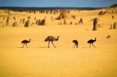 西澳大利亚州担保技术移民政策