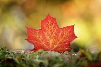 加拿大雇主担保移民政策