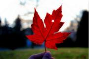 2020年加拿大市政提名移民试点计划MNP,究竟适合哪类申请人