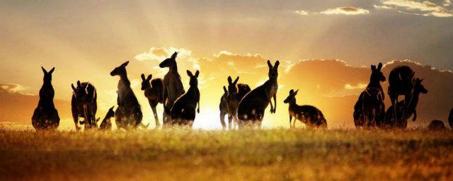 澳大利亚投资移民洲巡出国